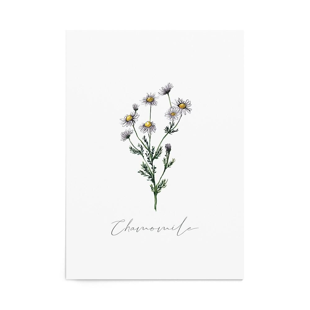 Art Print Chamomile