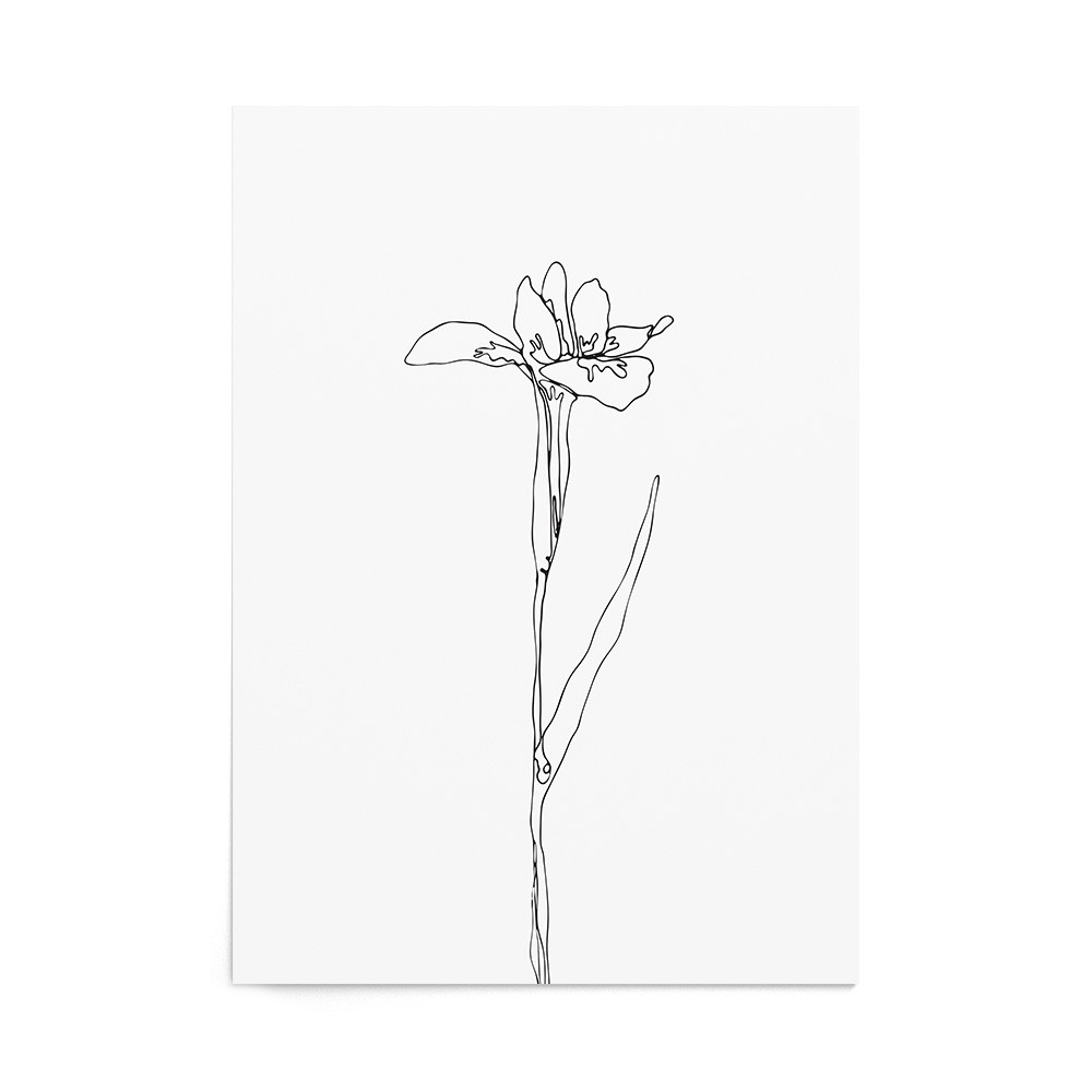 Art Print Iris