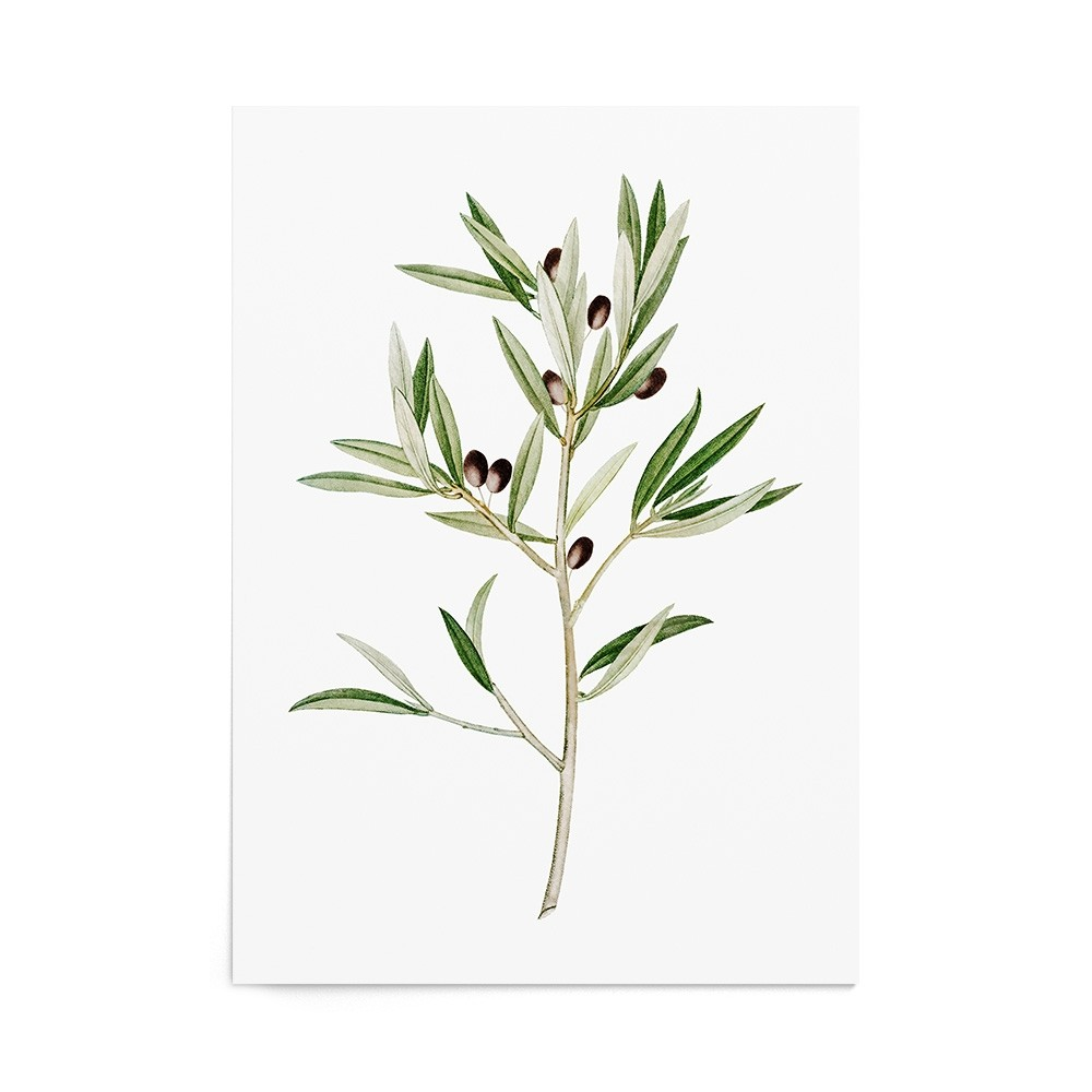 Art Print Olive Branch