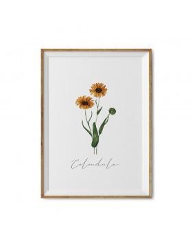 Art Print Calendula