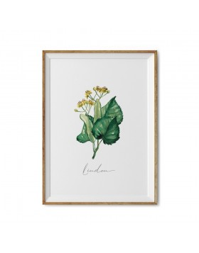 Art Print Linden