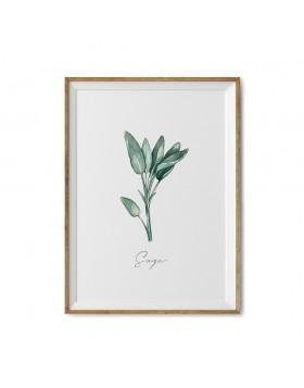 Art Print Sage