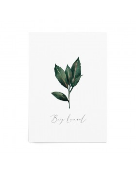 Art Print Bay Laurel