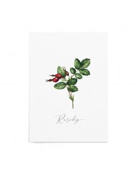 Art Print Rosehip